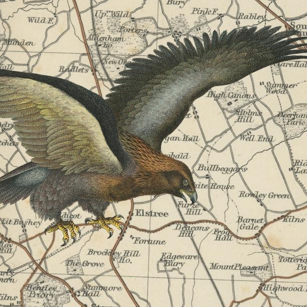 otm-eagle