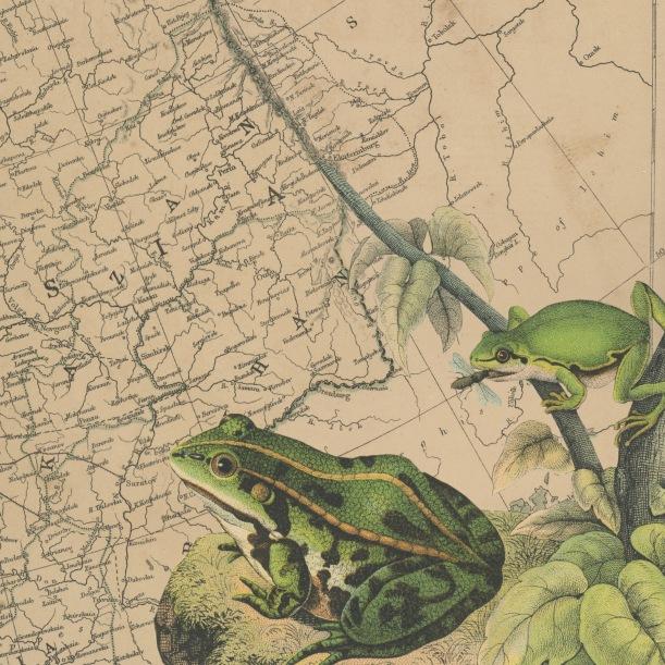 otm-frogs
