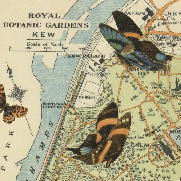 otm-gardenbutterfly