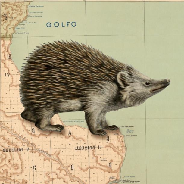 otm-hedgehog