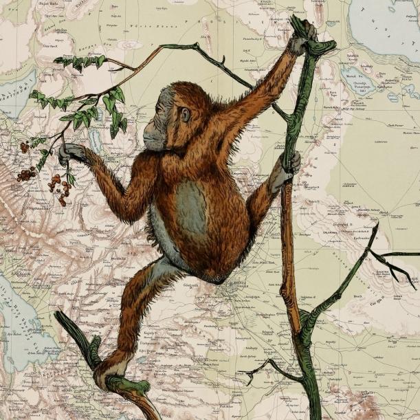 otm-monkey