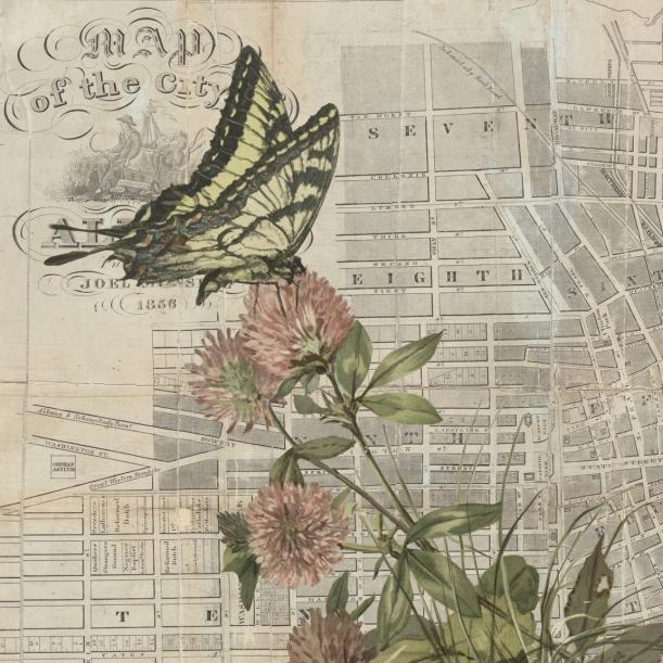 otm-butterflyflower