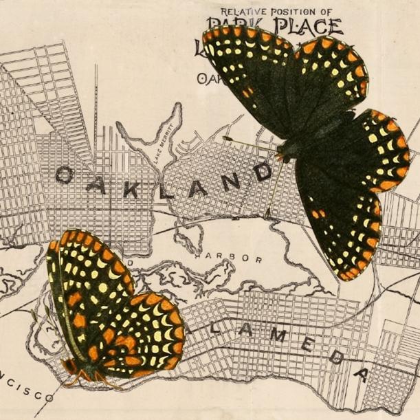 oth-darkbutterflies