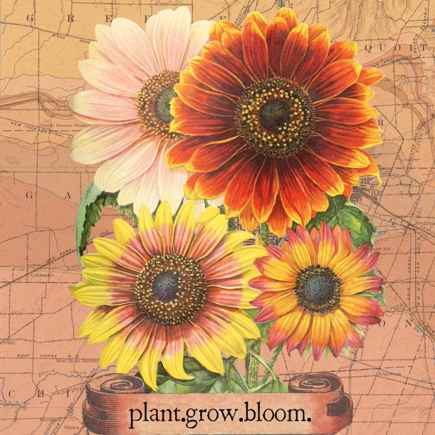 otm-sunflowers
