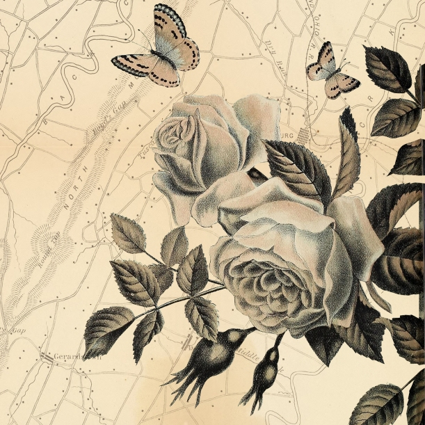 otm-roses
