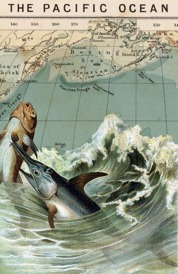 otm-swordfish.jpg