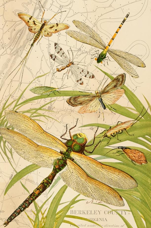 otm-dragonfly