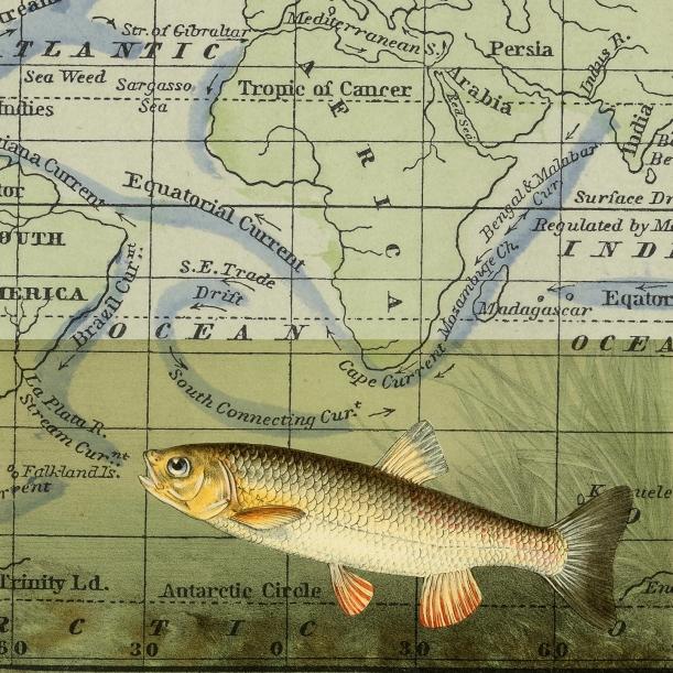 otm-singlefish