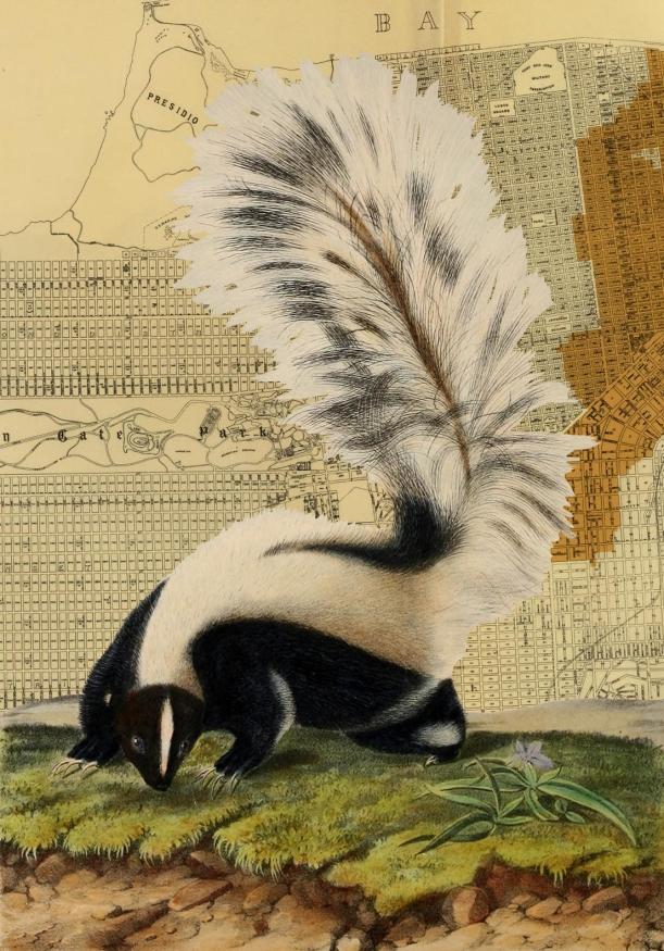 otm-skunk