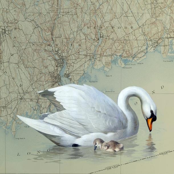 otm-swans