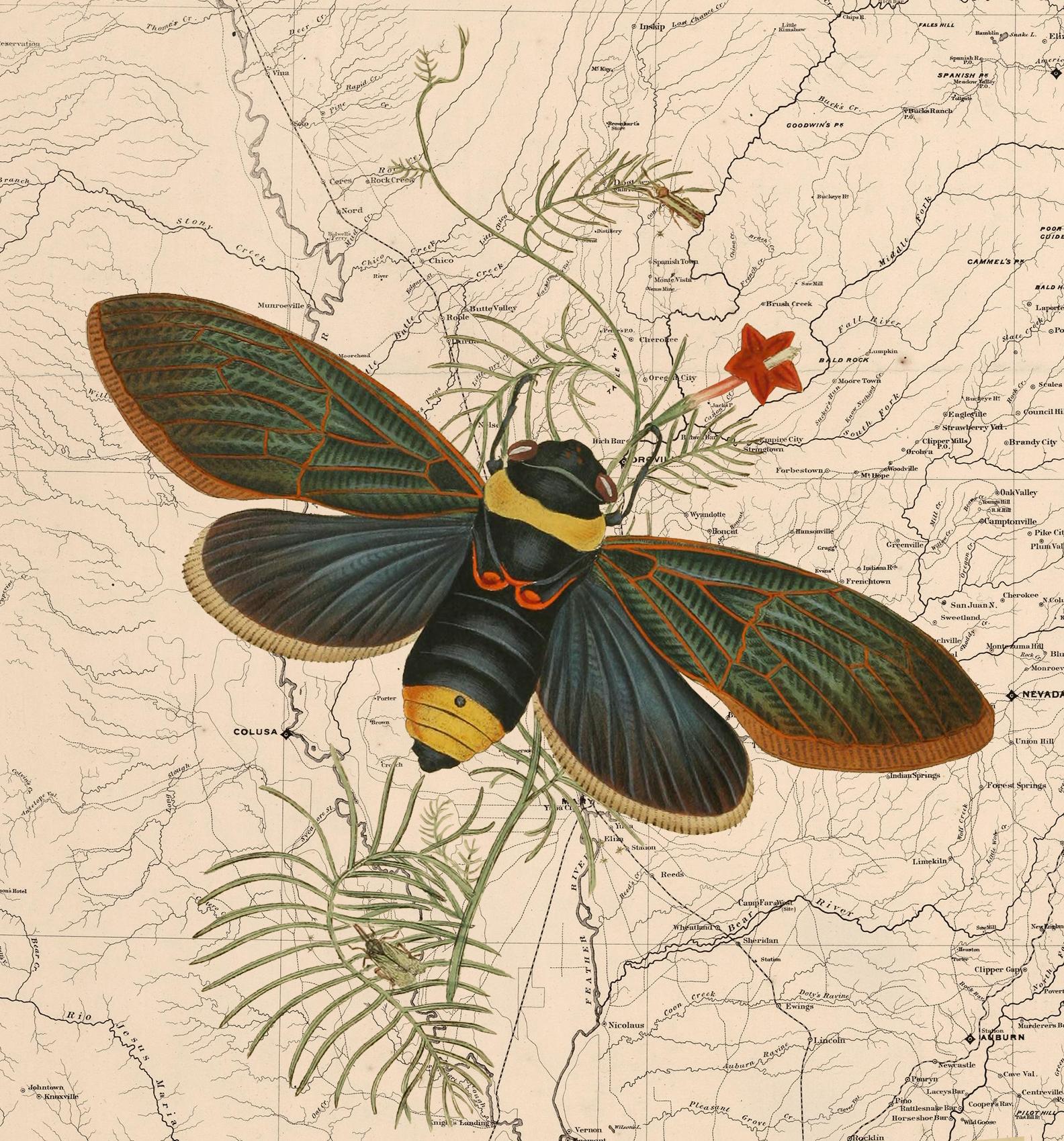 otm-moth